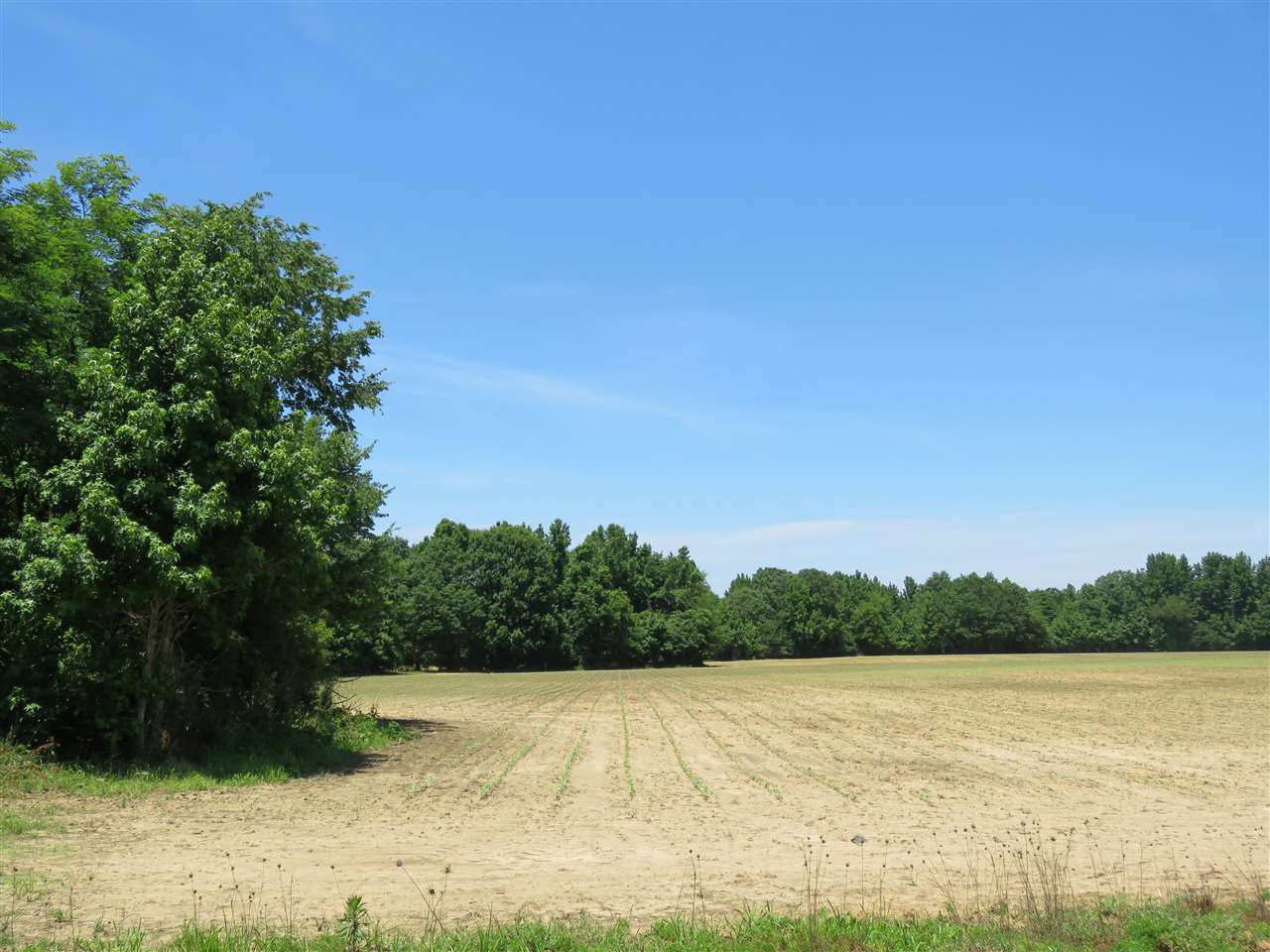 0 CR 444   Oxford MS 38655 - Mississippi property for sale